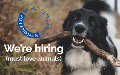 We're hiring! Communications Officer Vacancy