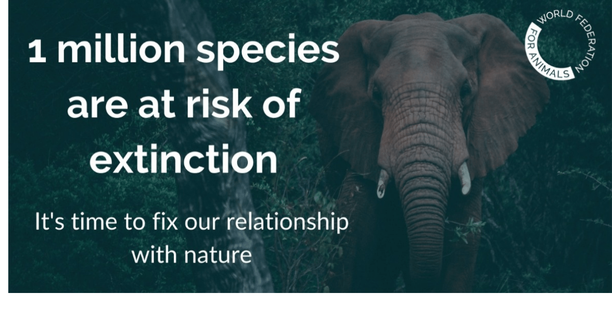 Graphic of an elephant with text '1 million species are at risk of extinction. It's time to fix our relationship with nature.'