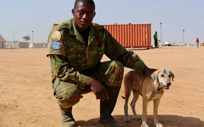 How animals are harmed by armed conflicts and military activities